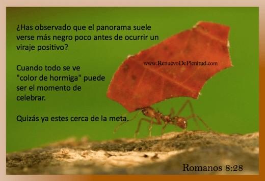 promesa-hormiga10