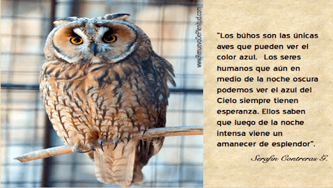pensamiento-buhos28